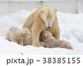 ホッキョクグマ 熊 動物の写真 38385155