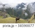 マチュピチュ 遺跡 世界遺産の写真 38390077