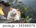 台湾 猴硐 ホウトン (猫村) 38396979