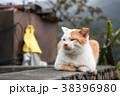 台湾 猴硐 ホウトン (猫村) 38396980