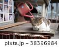 台湾 猴硐 ホウトン (猫村) 38396984