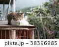 台湾 猴硐 ホウトン (猫村) 38396985