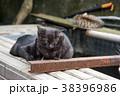 台湾 猴硐 ホウトン (猫村) 38396986