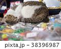 台湾 猴硐 ホウトン (猫村) 38396987