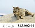 ねこ 猫 ネコの写真 38399244