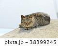 ねこ 猫 ネコの写真 38399245