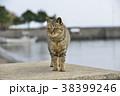 ねこ 猫 ネコの写真 38399246