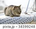 ねこ ネコ 猫の写真 38399248