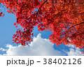 紅葉 もみじ 秋の写真 38402126