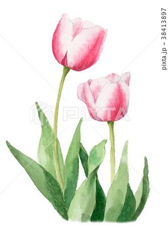 水彩で描いたピンクと白のチューリップ 38413897