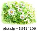 花 小菊 花畑のイラスト 38414109