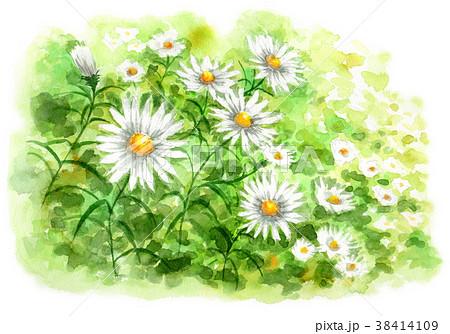 水彩で描いたカモミールの群生 38414109