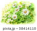 花 小菊 花畑のイラスト 38414110