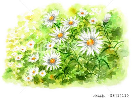 水彩で描いたカモミールの群生 38414110
