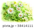 花 小菊 花畑のイラスト 38414111