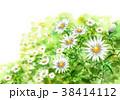 花 小菊 花畑のイラスト 38414112