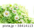 花 小菊 花畑のイラスト 38414113