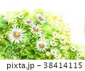 花 小菊 花畑のイラスト 38414115