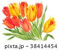 花 チューリップ 水彩のイラスト 38414454