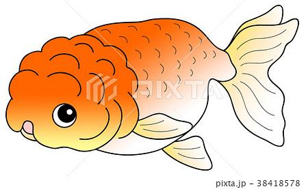 金魚 らんちゅう 38418578