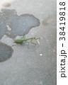 snapshot 38419818