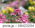 花 バラ 植物の写真 38423204
