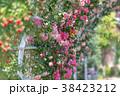 花 バラ 植物の写真 38423212