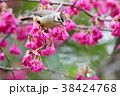鳥 野鳥 青灰色の写真 38424768