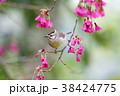 鳥 野鳥 青灰色の写真 38424775