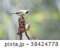 鳥 野鳥 青灰色の写真 38424778