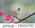 鳥 野鳥 青灰色の写真 38424792