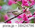 鳥 野鳥 青灰色の写真 38424796