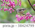 鳥 野鳥 青灰色の写真 38424799