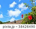 青空 ハイビスカス 沖縄の写真 38426490