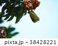 鳥 からし色 昆虫 38428221
