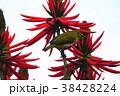 鳥 からし色 昆虫 38428224