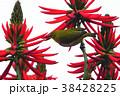 鳥 からし色 昆虫 38428225