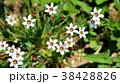 花 植物 野草の写真 38428826