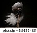 Woman in undrewear and pointe shoes in dust cloud 38432485