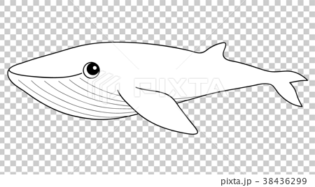 - Blue Whale Coloring Page - Stock Illustration [38436299] - PIXTA