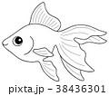 塗り絵 魚 金魚のイラスト 38436301