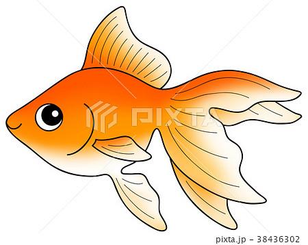 金魚 流金(琉金) 38436302