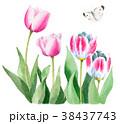 チューリップ 花 ピンクのイラスト 38437743