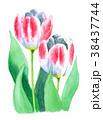 水彩 チューリップ 花のイラスト 38437744