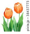 水彩 チューリップ 花のイラスト 38437773