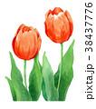 水彩 チューリップ 花のイラスト 38437776