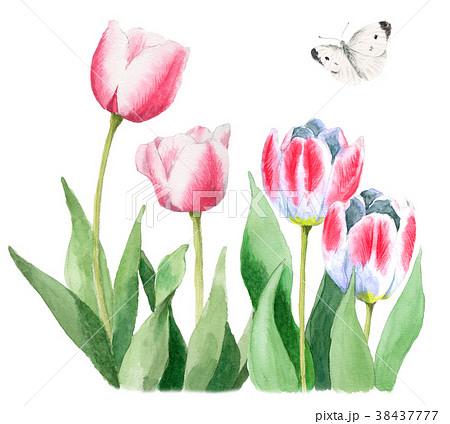 水彩で描いたピンクと白のチューリップとモンシロチョウ 38437777