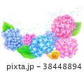 紫陽花 花 植物のイラスト 38448894