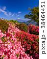 富士山 葛城山 花の写真 38464451