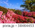 富士山 葛城山 花の写真 38464453